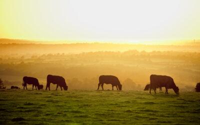 System jakości QMP narzędziem do realizacji Europejskiego Zielonego Ładu w produkcji wołowiny