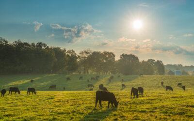 Bezpłatna promocja polskich hodowli i gospodarstw