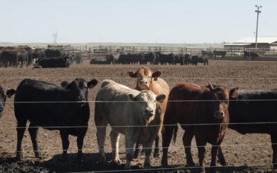 Opracowanie 3 metod redukcji emisji w chowie bydła mięsnego