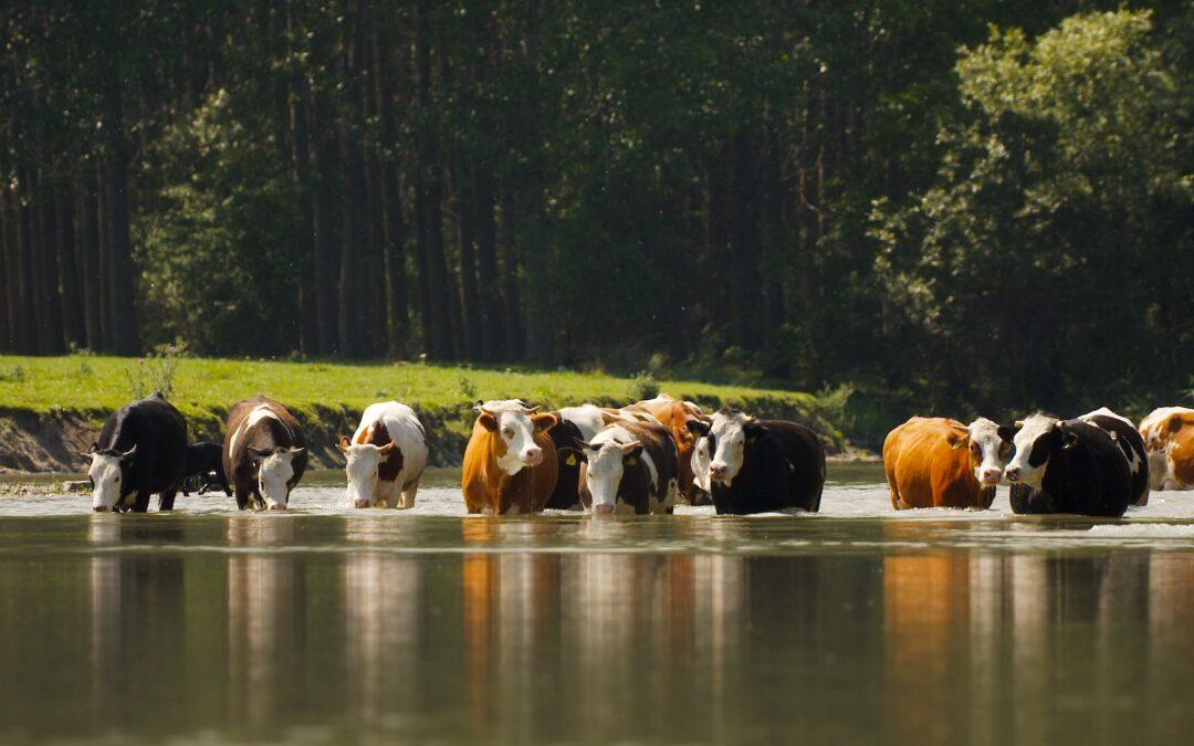 Ekspertyza w zakresie prowadzonych prac analitycznych i działań PR dla promowania produkcji zrównoważonej wołowiny.